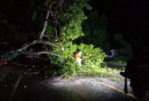 Petugas gabungan memotong pohon tumbang di jalan Rembang – Blora, sekitar Mapolsek Bulu, Kamis malam (19/11).