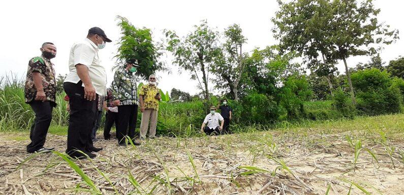 Sektor Tanaman Tebu Disentuh Bantuan Kementerian Pertanian, Ternyata Seperti Ini Bentuknya