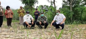 Bupati Rembang, Abdul Hafidz bersama pejabat Kementerian Pertanian mengecek lahan tebu di Desa Ketangi, Kecamatan Pamotan yang menjadi sasaran bantuan, Rabu (30/12).