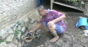 Paminto Dwi Atmojo mengambil air kencing kambing yang ditampung ke dalam timba. (Foto atas) Penyemprotan di lahan sawah miliknya dengan pupuk organik cair, berbahan air kencing kambing.