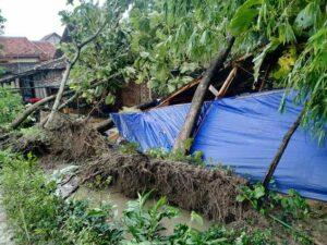 Bencana angin puting beliung di Desa Kebonagung, Kecamatan Sulang. (Foto atas) Rumah roboh di Desa Karangsari, Kecamatan Sulang, Selasa (02/03).