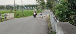 Jalan di dekat jembatan Desa Gading Kecamatan Sale, dipasangi batu sebagai penanda kondisinya rawan.