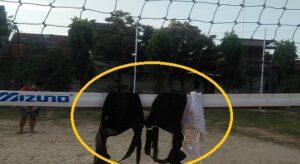 BH diletakkan ke net lapangan volly. (Foto atas) Polisi mengecek lokasi Perumahan Sumber Mukti Indah Sumberejo, Rembang, hari Jum'at (30/07).