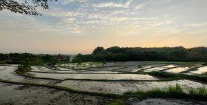 Lahan pertanian di perbatasan antara Kecamatan Pancur dengan Kecamatan Sedan.